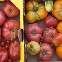 In the Garden: Roasted Tomato Soup