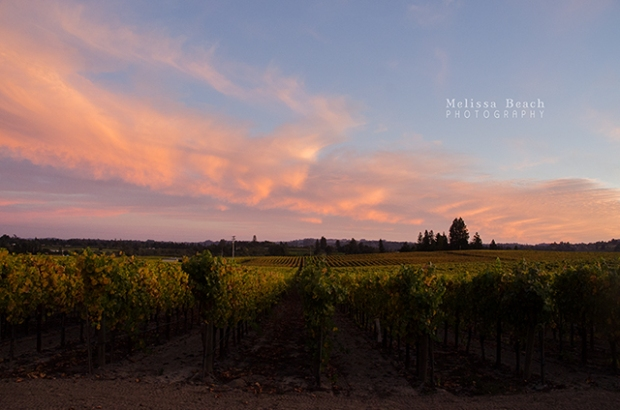 Vineyard Sunset 640x