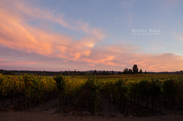 Vineyard Sunset 640x